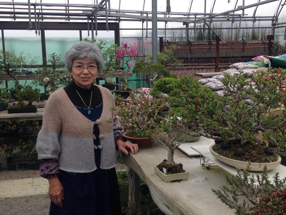 盆栽と魅力と須坂01