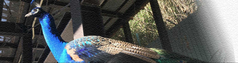 2019動物園写真04